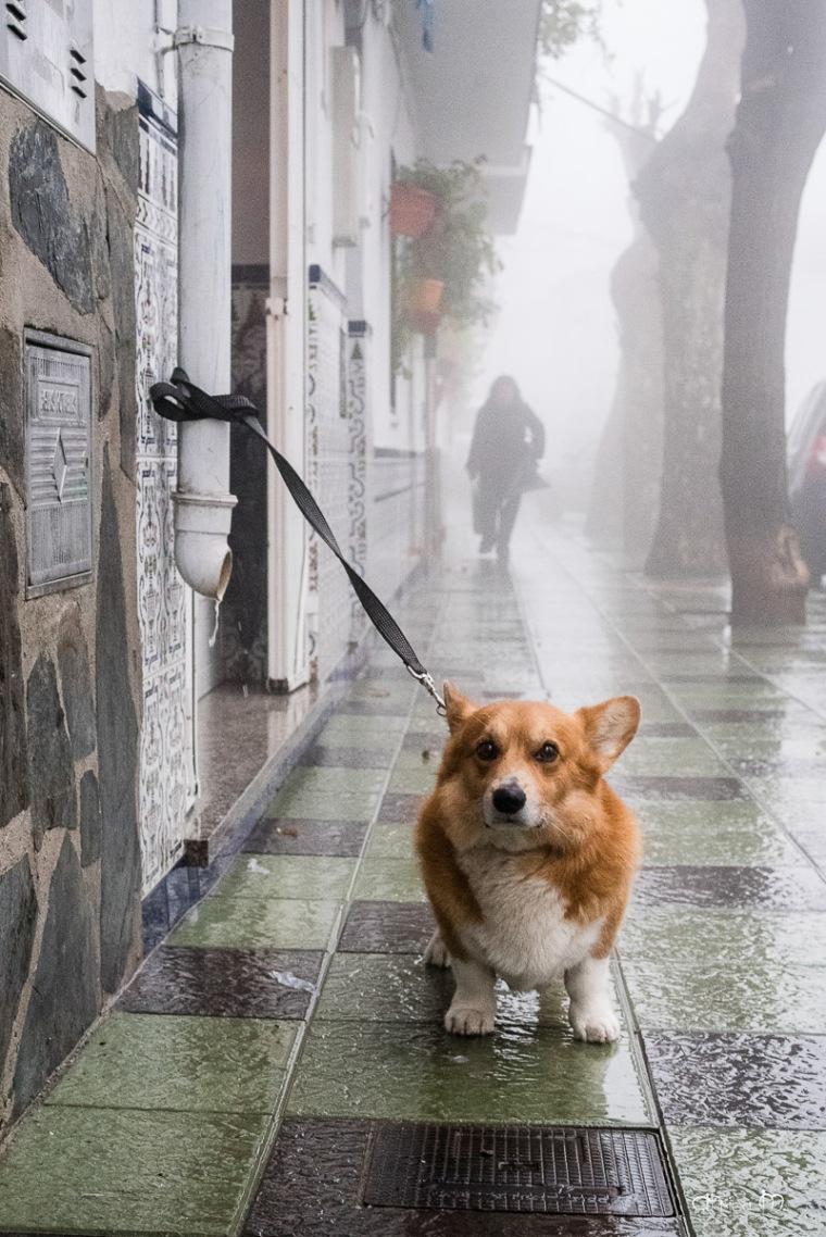 esperando bajo la lluvia